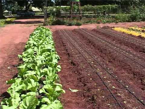 Drip Irrigation In Malawi 2014