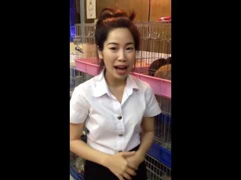 ซื้อกระต่ายที่ไหนดี...ต้องซื้อที่ Tanrak Petshop - ร้านกระต่ายแทนรัก