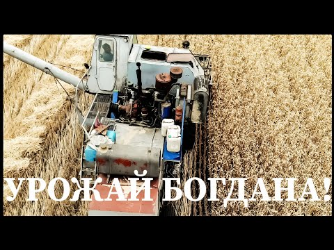 Уборка высоко-потенциально урожайной пшеницы Богдана! Нива СК-5  - бочка металлолома!