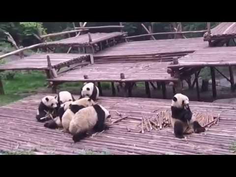 Chengdu or Chendon't