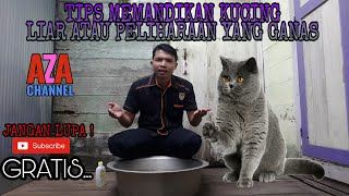 Download Video TIPS MEMANDIKAN KUCING LIAR ATAU PELIHARAAN YANG GANAS. MP3 3GP MP4