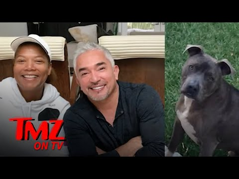 Cesar-Millans-Pit-Bull-Allegedly-Killed-Queen-Latifahs-Dog-Then-Covered-It-Up-TMZ-TV