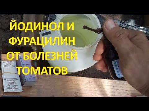 Мой новый состав ЙОДИНОЛ + ФУРАЦИЛИН от болезней томатов и огурцов. Средство от фитофторы.