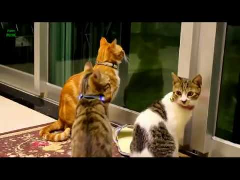 Funny Cats and Kittens Meowing Compilation 2017