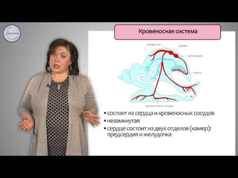 Биология 7 Класс Брюхоногие моллюски