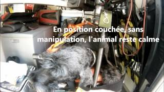 Transport d'animaux, ambulance animalière ASUV34