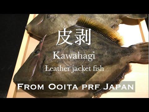 Exquisites!! KAWAHAGI Fish(Leather Jacket-fish)#Howtofillet#sishi# Introduces Amazing Japanese Fish