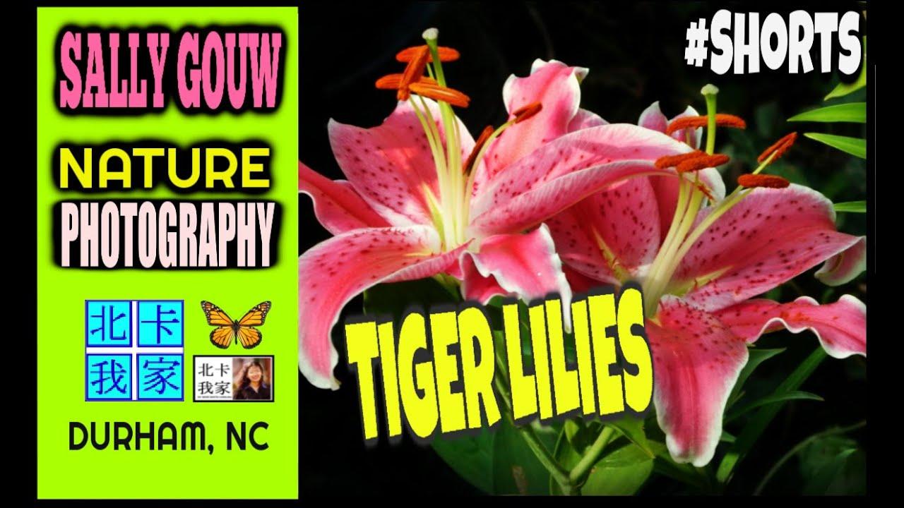 Tiger Lilies at Night Shorts