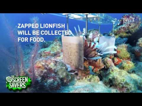 Lionfish Killing Robot