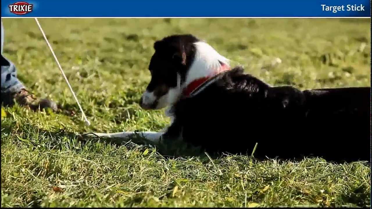 Dog Clicker Training Video Tricks