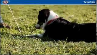 Teaching Your Dog Target Stick, And Clicker Training. A Great Trick To Teach Dogs.