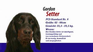 Gordon Setter - Meister Petz Tv Rasseportrait Mpt 144