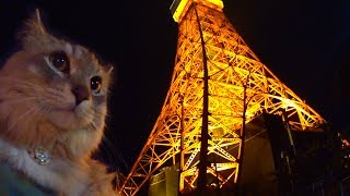 Cat HAL meets Ms. Tokyo Tower for the first time. She is so charmin...
