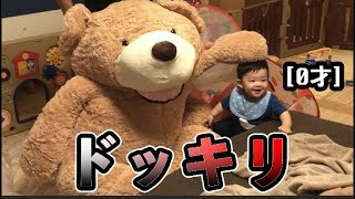 Theory: a friendly baby is not scared by a big bear.