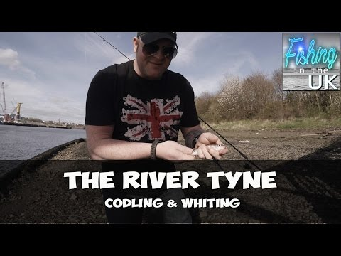 Fishing the river Tyne - Codling and Whiting.