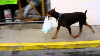 Doberman attacks shopping plaza