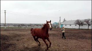 лошадь продажа