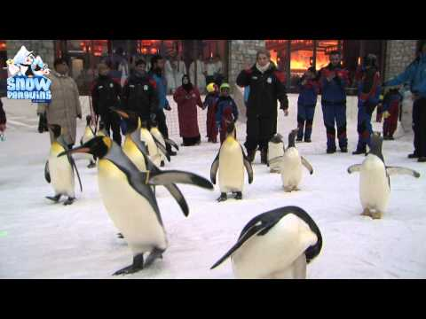 March of the Penguins – World Penguin Day 2013 at Ski Dubai