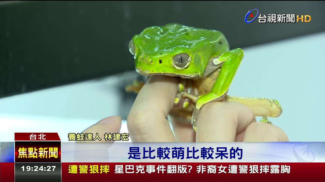 旅 蛙 破解 版