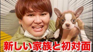 タナカガの新しい愛犬と初対面してきたwww