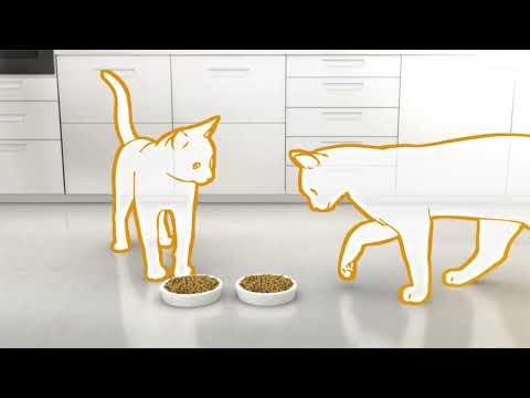 10 способов снять стресс у кошки рацион Hill's 10 способ