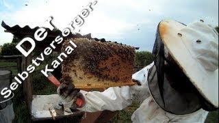 Bienenkiste Honigernte abgebrochen Teil 1