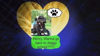Henry, Wanna Go To Doggy School???