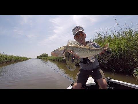 Судак на Кубани. Рыбалка в Темрюке