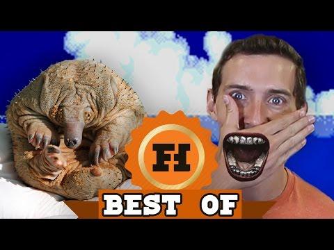 BEST OF PORN - Best Of Funhaus August 2016