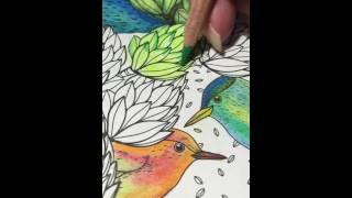 Blending Watercolor Pencils with Vaseline