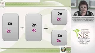 Абдрахманова Р А    Клеточный цикл  Митоз  Мейоз, механизмы рекомбинации генетического ма