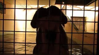 姫路動物園(姫路市立動物園)の2014年7月28日生まれの3歳のオスのカバ...