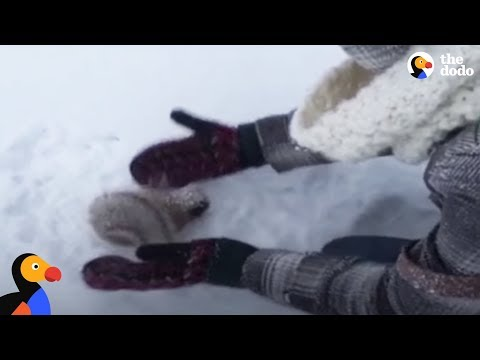 Kids Rescue Frozen Squirrel | The Dodo