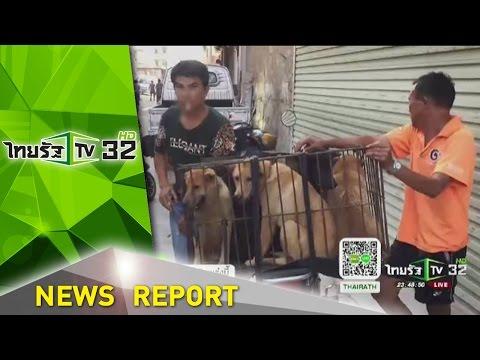 จีนเริ่มเทศกาลกินเนื้อสุนัข   21-06-59   ไทยรัฐเจาะประเด็น   ThairathTV