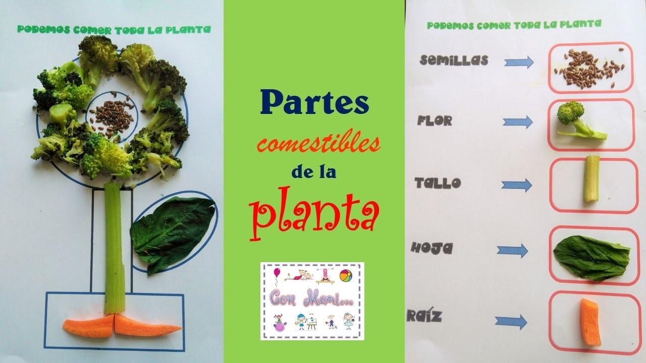 Partes comestible de la planta para nios de preescolar ...