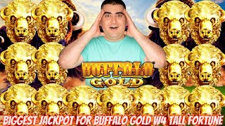 Biggest Handpay Jackpot On YOUTUBE HISTORY For Buffalo Gold Wonder 4 TALL FORTUNES Slot Machine