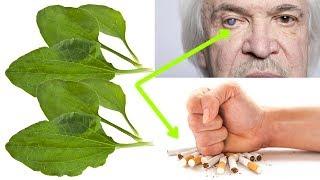 Ta roślina rośnie wszędzie, oduczy palenia, naprawi nerwy i wątrobę oraz uchroni oczy.
