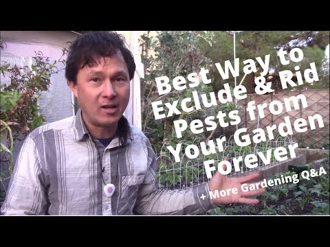 Best Way to Exclude & Rid Pests From Your Garden Forever & More Organic Gardening Q&A