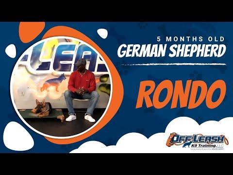 4 5 Month Old German Shepherd Rondo!|Best Dog Trainers VA|14 Day Transformation!