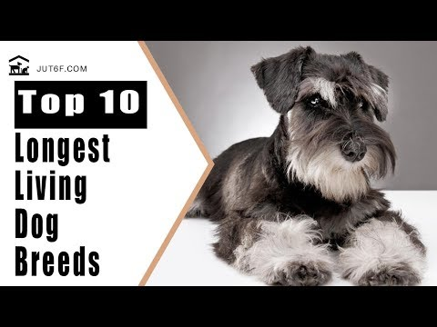 Longest Living Dog - Top 10 Longest Living Dog Breeds In The World