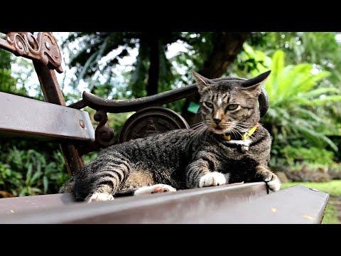 Diese Katze kommt zurück nach Hause und bringt einen ganz besonderen Freund mit