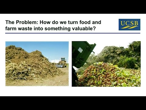 What Gut Microbes Can Teach Us About Sustainability