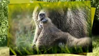 Красивая музыка!!! Послушайте!!! Мир животных. Проект ProShow Producer