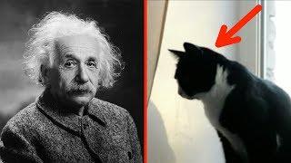 5 Anzeichen, dass du einen höheren IQ hast als der…
