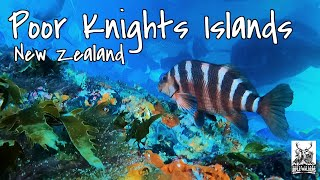 Free Diving at Poor Knights Island