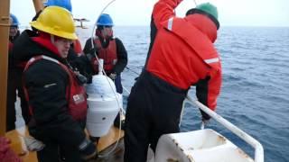 Deploying Drift Buoys, Chukchi Sea 8-18-15