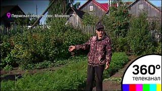 В Перми осудили пенсионера за выросший в огороде мак
