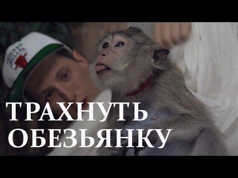 Видео Секс с шимпанзе порно