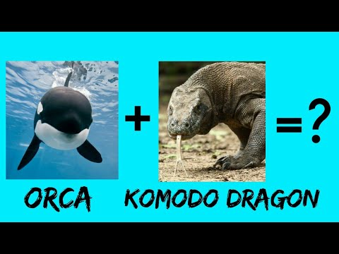 Orca + Komodo Dragon = ? | OCtober Challenge