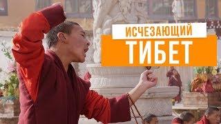 Тибет: интервью с живым Буддой и город-монастырь на 10 000 монахов